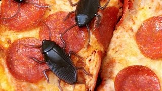 Download COCKROACHES ON PIZZA! Video