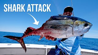 Download Shark Attacks our Giant Tuna Video