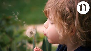 Download The secret physics of dandelion seeds Video