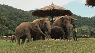 Download Assignment Asia: Thailand's elephant whisperer Video