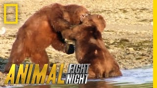 Download Bears Brawl Over Blubber Banquet | Animal Fight Night Video