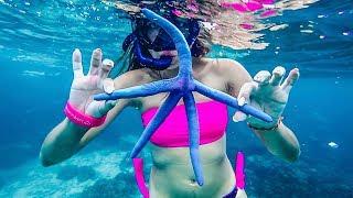 Download Остров Ко Рок - лучший подводный мир Таиланда Video