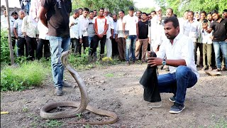 Download कुऐं से बाहर निकाला कोबरा सांप, पूरा वीडियो देखे Rescue Big indian cobra snake from kasar pimplgaon Video