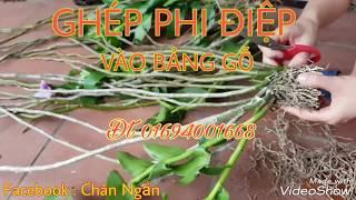 Download GHÉP PHI ĐIỆP VÀO BẢNG GỖ Video