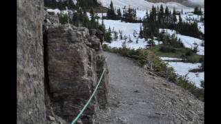 Download A Grizzly Encounter Video
