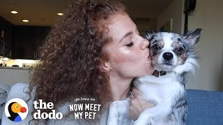 Download Hamster-Sized Puppy Grows To Be So SPUNKY With Mahogany Lox | The Dodo You Know Me Now Meet My Pet Video