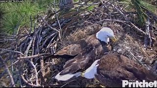 Download SWFL Eagles ~ Incubation Shifts 12.5.16 Video