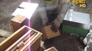 Download Instalação de Pacotes de abelhas - MACMEL Apicultura Video
