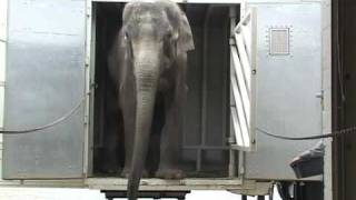 Download The Elephant Sanctuary | Ned's Arrival Video