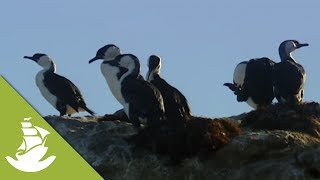 Download Seabird excrement helps the fish population survive Video
