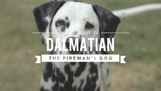 Download ALL ABOUT DALMATIANS: THE FIREHOUSE DOG Video