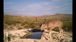 Download Animals on Camera, Water for Wildlife Video