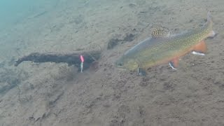 Download Ice Fishing Brook Trout - Under Water View! Video