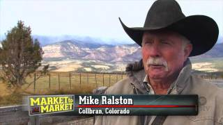 Download Cattle buyer works to build herds out West Video