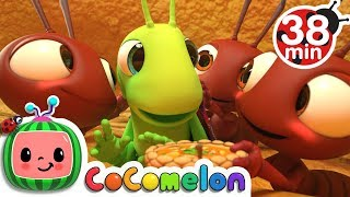 Download The Ant and the Grasshopper | +More Nursery Rhymes & Kids Songs - CoCoMelon Video