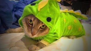 Download Cute Pets 🐱🐶 Lovely Cats And Dogs Wearing Costumes (Full) [Funny Pets] Video