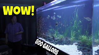 Download This 800 gallon Aquarium will Change the Way you Look at Monster Fish Tanks! Video