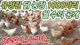 Download 귀농 유정란 닭 천마리 수익공개 귀농귀촌 실황 Video