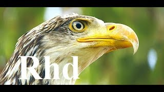 Download The Secret Life of the Circler, Birds. 2018 HD Documentary. Video