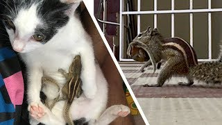 Download Rescuing Baby Squirrels Outside - Reunion with Mother After 4 days (Happy ending story) Video