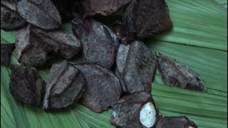 Download Amazon's indigenous people live off income from Brazil nuts Video
