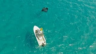 Download Sight Fishing Cobia on Manta Rays - ft. Chew On This Video