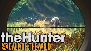Download Rare Cinnamon Black Bear Hunting! - TheHunter: Call of the Wild Gameplay Video