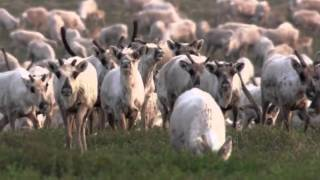 Download Planet Earth From Pole to Pole (1) Video