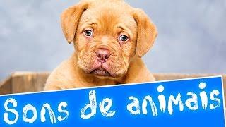 Download Sons de animais | Aprender sons de animais em português Video