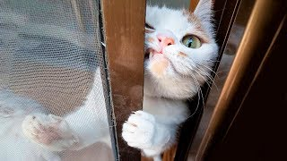 Download 😂 Funniest 😻 Cats and 🐶 Dogs - Awesome Funny Pet Animals' Life Videos 😇 Video