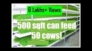 Download Dairy Farming 02 - Open Air Hydroponic Fodder Machine (Hindi sub) | PlugInCaroo Video