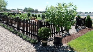Download Planting Limelight Hydrangea Trees Video