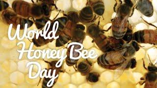 Download Happy World Honey Bee Day! Video