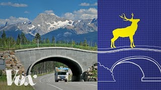 Download Wildlife crossings stop roadkill. Why aren't there more? Video