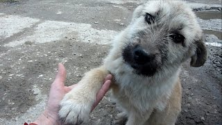 Download Puppy Abandoned on a Busy Road Gets Rescued Just in Time Video