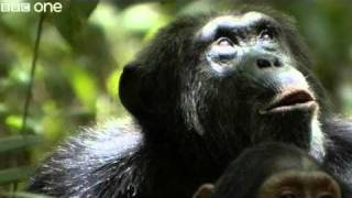 Download Funny Talking Animals - Walk On The Wild Side - Series 2, Episode 2 Preview - BBC One Video