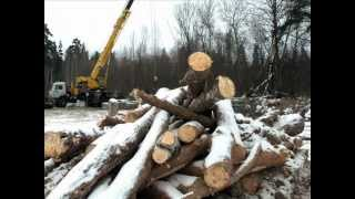 Download Последствия вырубки леса Video