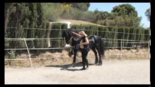 Download The Beautiful Friesian Horse Part 1 Video