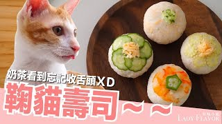 Download 鞠貓壽司!橘貓壽司!橘皮壽司!【好味貓廚房】EP116 Video