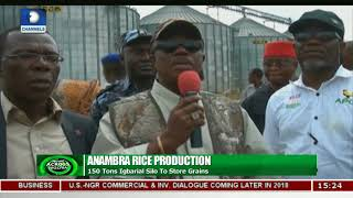 Download Anambra Govt Targets Year Round Rice Production |News Across Nigeria| Video