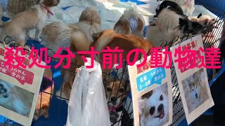 Download 犬猫里親募集会場の現場に行ってきました!The pets that the Japanese abandoned Video