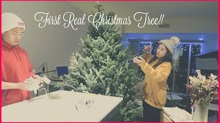 Download VLOGMAS #1 | First REAL Christmas Tree! Video