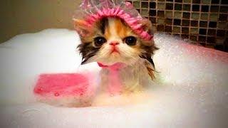 Download Funny Cats 😻 Funny Cute Cats Fails (Full) [Funny Pets] Video