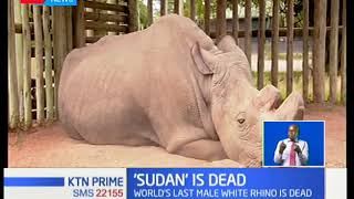 Download The last male northern white rhino Sudan has died at the age of 45 Video