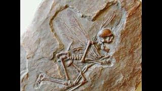 Download 10 Fósiles Encontrados Más Caros en la Historia Video