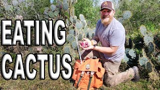 Download How To Eat A Cactus Fruit / Day 3 Of 30 Day Survival Challenge Texas Video