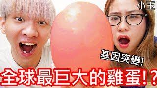 Download 【小玉】基因突變!全球最巨大的雞蛋!?【35公分鴕鳥蛋】 Video