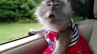 Download Just a Monkey Celebrating Freedom on July 4 Video