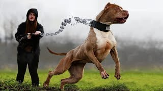 Download 10 Dog Breeds That You Should Fear The Most Video