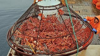 Download Awesome Big Alaska King Crab Fishing on The Sea - Fastest Catching & Processing King Crab Video